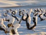 Invierno, Rioja, Cepas Florentino Martinez, Rioja turismo