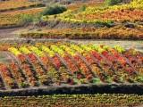 Bodega Rioja, Bodega Familiar, La Rioja, Vino, Tinto, Clarete